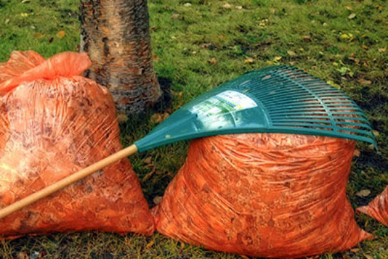Last Day for Bayonne Leaf Pick-Ups is Monday, December 5