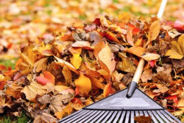Last Day for Bayonne Leaf Pick-Ups is Monday, December 4